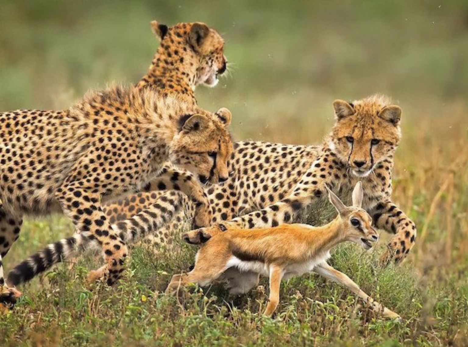 Protect the mother against predators
